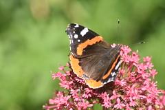 DSC_4668 (Peter-Williams) Tags: brighton sussex uk paviliongardens flowers