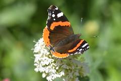 DSC_4659 (Peter-Williams) Tags: brighton sussex uk paviliongardens flowers