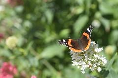DSC_4651 (Peter-Williams) Tags: brighton sussex uk paviliongardens flowers