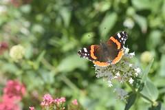 DSC_4650 (Peter-Williams) Tags: brighton sussex uk paviliongardens flowers