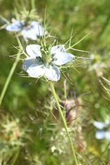 DSC_4634 (Peter-Williams) Tags: brighton sussex uk paviliongardens flowers