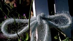 Connect curves (dl1ydn) Tags: dl1ydn curves macromondays makrokilar 90mmf28 kilfitt macro nahaufnahmen kurven knoten manual manuell vintagelens closeup jpeg garden flowerdeko hmm