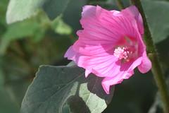 DSC_4619 (Peter-Williams) Tags: brighton sussex uk paviliongardens flowers