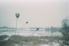 The quiet trio (Moesko Photography) Tags: analogue smena8m winter snow plant park water lake macro nature outdoor munich münchen riem germany