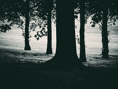 Dark Woods (graemes83) Tags: trees tree nature trunk wood leaves grass lines dark moody toned
