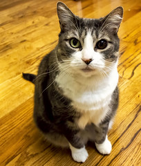 """2019-06-16 """"I'm cute. Please feed me!"""" (Mary Wardell) Tags: cat kitty pet justforfun"""