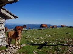 Beriain (eitb.eus) Tags: eitbcom 24680 g151028 tiemponaturaleza tiempon2019 paisajes nafarroa zúñiga césarurien