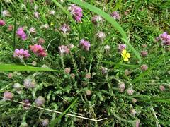 IMG_2111 (belight7) Tags: nature uk england burnham beeches