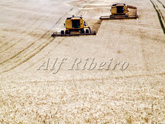 Alf 0007 - 0090 (Alf Ribeiro) Tags: brazil bread agriculture agribusiness food industry field rural america work landscape gold golden countryside corn cut earth farm country farming grain cereal harvest meadow machine farmland equipment machinery crop combine ear land parana flour heavy job harvester agricultural harvesting tractor stem wheat south seed straw scene rye strong strength produce ripe