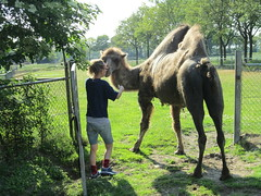 conversation ,  with  Josephine (excellentzebu1050) Tags: camel camelus animal camelusbactrianus grass farm dairyfarm outdoor field farmer