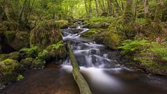 Gorges de la Canche (Thos A.) Tags: river rivière forest forêt stream longexposure green vert verdoyant nature naturephotography nd naturaleza moss mousse bourgogne morvan samyang canon eos80d