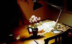 table (bluebird87) Tags: table film dx0 c41 epson v800 kodak ektar nikon f5 lightroom 35mm