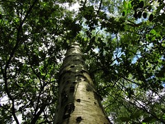 IMG_2039 (belight7) Tags: burnham beeches uk england tree