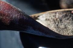Wisteria Seed Pod (markus_kaeppeli) Tags: macromondays hmm curves sony a99ii 28