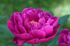 Artstetten (liakada-web) Tags: artstetten at austria aut österreich blume flower niederösterreich nikond7500 nikon d7500