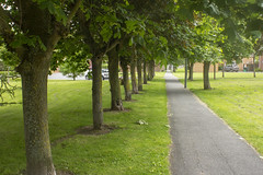 Avenue of trees (rhianwhit) Tags: grass trees avenue path