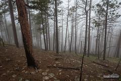 Foggy Burnt Forest (kevin-palmer) Tags: blackhills blackhillsnationalforest spearfish southdakota crowpeak june spring cold cloudy overcast fog foggy nikond750 tamron2470mmf28 trees burnt spooky