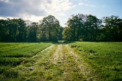 Meebos (Jos Mecklenfeld) Tags: sonya6000 sonyilce6000 sonye30mmf35macro sel30m35 meebos westerwolde niederlande nederland nature natur natuur forest waldbos wald bos spring frühling lente landscape landschaft landschap path pad pfad terapel groningen netherlands