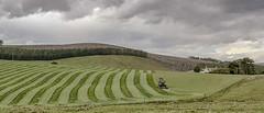 Stripes (judmac1) Tags: field farm tractor grass agriculture stripes
