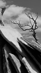 Crackle & Pop (Rand Luv'n Life) Tags: odc our daily challenge stacked stone tiles cloud dead cedar fire tree james hubbel ranch house outdoors monochrome blackandwhite crackle pop