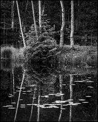 Svartvit spegling (Jonas Thomén) Tags: svartvit blackandwhite bw monokrom monochrome lake sjö näckrosor waterlilies tree träd skog woods forest reflection spegling vatten water gräs grass