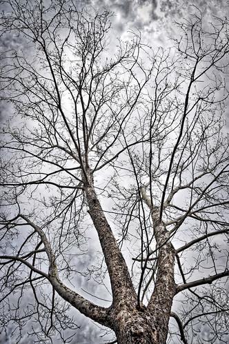 'Moon Tree' -- Botanical Gardens Birmingham (AL) February 2019