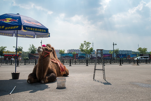 Datong | the red bull