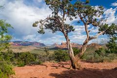 DSC08193-HDR (SpecialK1217) Tags: landscape arizona sedona trees desert nature adventure explore hdr