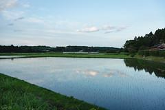 田 (fumi*23) Tags: ilce7rm3 sony sel35f28z 35mm sonnar a7r3 field ricefield country countryside reflection sonnartfe35mmf28za miyazaki japan water 田 水田 宮崎 ソニー 水