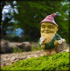 DSCN6311 (DianeBerky19) Tags: nikon coolpixp1000 gnome
