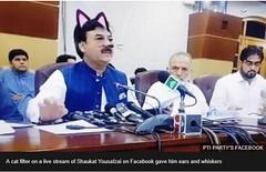 Day 168 (Iain Purdie) Tags: pakistan politics filter facebook kitten cat happy 2019