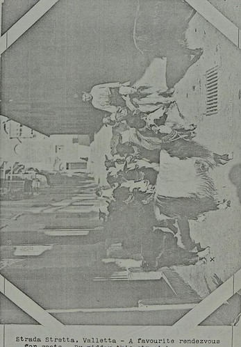 This image is taken from Page 89 of Malta fever