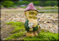 DSCN6313 (DianeBerky19) Tags: nikon coolpixp1000 gnome