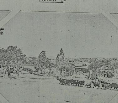 This image is taken from Page 87 of Malta fever