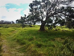 Big Island Field (Tianna Chantal) Tags: bigisland hawaii field landscape green tree nature outdoors rural shire sky clouds path nationalpark