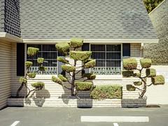 San Jose, California (bior) Tags: pentax645d mediumformat sanjose california office bush