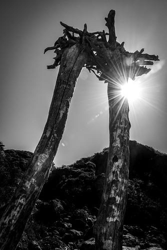 Driftwood Structure, Shell Beach, Occidental