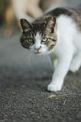 猫 (fumi*23) Tags: ilce7rm3 85mm sel85f18 fe85mmf18 cat chat gato katze neko bokeh depthoffield apsccrop ねこ 猫 sony ソニー