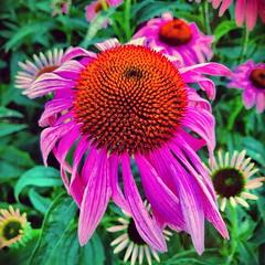 Meanwhile in College Park. #collegepark #maryland #iPhone #commute #sidewalk #roadside #iPhonemacro #macro  #flower #flowersofinstagram (Kindle Girl) Tags: roadside collegepark maryland iphone commute sidewalk iphonemacro macro flower flowersofinstagram