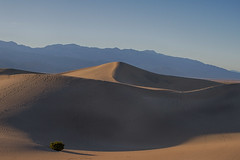 Death Valley Mesquite Dunes (swissuki) Tags: deathvalley mesquitedunes andscape desert largelandscape ca california usa nationalpark nature national park