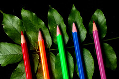 5 - cinco. Crazy Tuesday! (cbrozek21) Tags: five cinco crazytuesday pencil leaf color