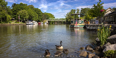 Pittsford New York 2019 (John Hoadley) Tags: eriecanal pittsford newyork 2019 june canon eosr 24105 f71 iso250 boat bridge canadageese geese birds