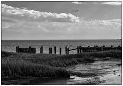 Elliott Island (Working Image Photography) Tags: dorchestercounty easternshore maryland wharf fishingbay blackandwhite bw fujifilm xt20 elliottisland marina
