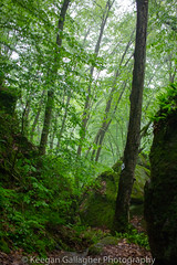 Before the Storm (keegsley) Tags: cave fog foggy green bolder overlook middle loop minister creek hiking trails trail hike allegheny national forest pennsylvania pa nature landscape path pathway scenic