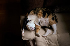 Holiday afternoon nap (Alexis Pojomovsky) Tags: cat nap meike 35mm f17
