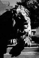 Class of 1879 Lion (Dalliance with Light (Andy Farmer)) Tags: sculpture fujifilmacros wilsonhall leicam6 iso400 princeton princetonuniversity bw hc110dilb film summicron50mm