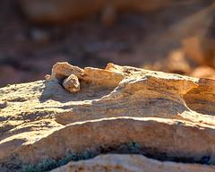 Details (LauriNovakPhotography) Tags: redrockcanyon lasvegas ig9redrock