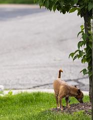 Dog Sniff (Rick Vestuto) Tags: sony a7riii 135mm f18 gm