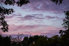 june evening view (wwnorm) Tags: backyard clouds cloudscape evening picaday2019 sky skycapture skyclouds skyscape