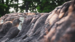 Tiny Landscape 21. Petit Jean Mountain. (issafly) Tags: nikon nature d500 naturalstate ouchitamountains ouchitas wanderfar tinylandscape arkansas petitjeanstatepark petitjean outside travel nikkor35mm arkansasoutdoors landscape nikond500 explorearkansas 2019 statepark mountain